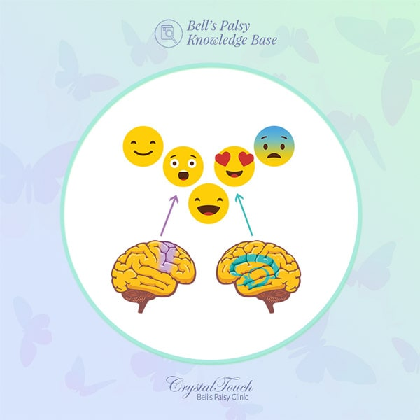 The two systems in our brain that controls our facial expressions during Bell's palsy